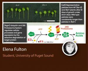 Elena Fulton ePortfolio screenshot